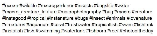 изображения рыбок или насекомых